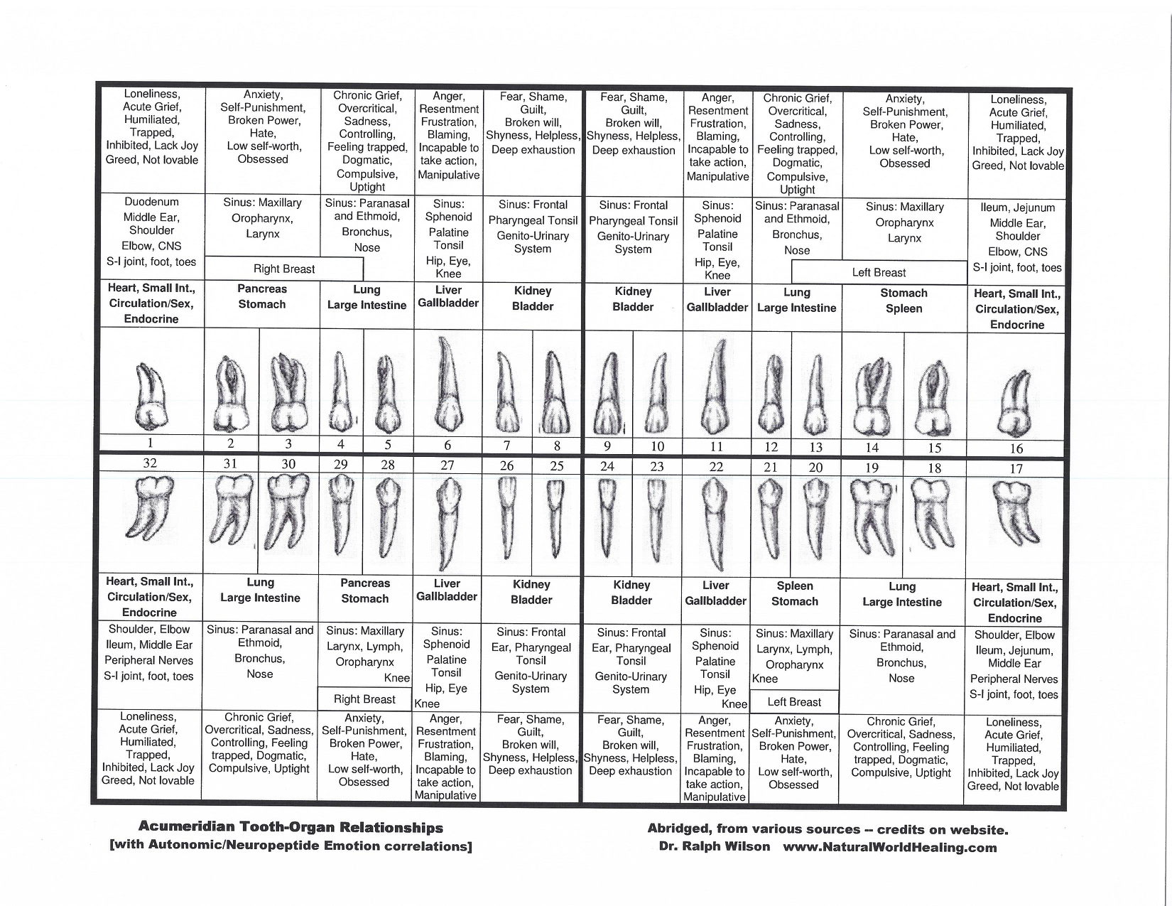 tooth organ chart